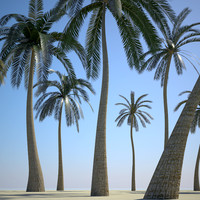 3d palm trees