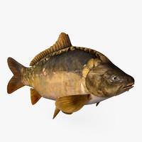 3d mirror carp