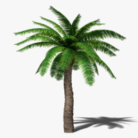 Beautiful Palm Tree