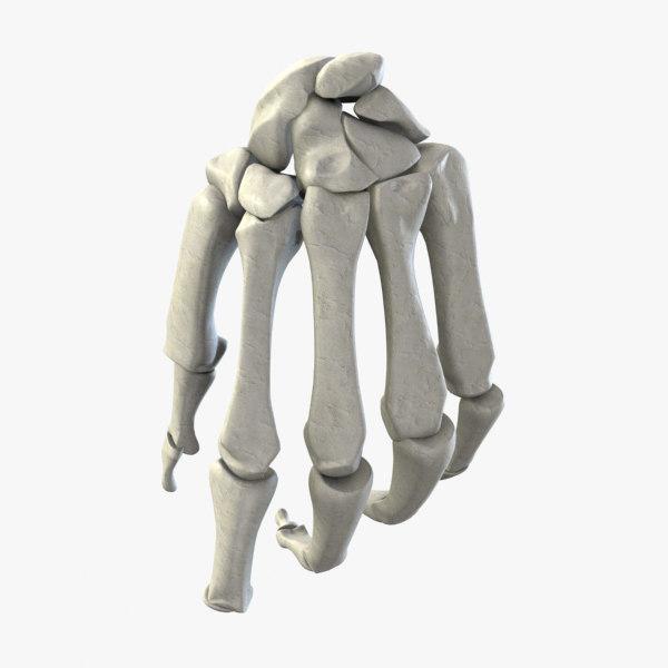 3d human bone hand ccuart Choice Image