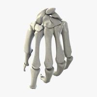 3d human bone hand