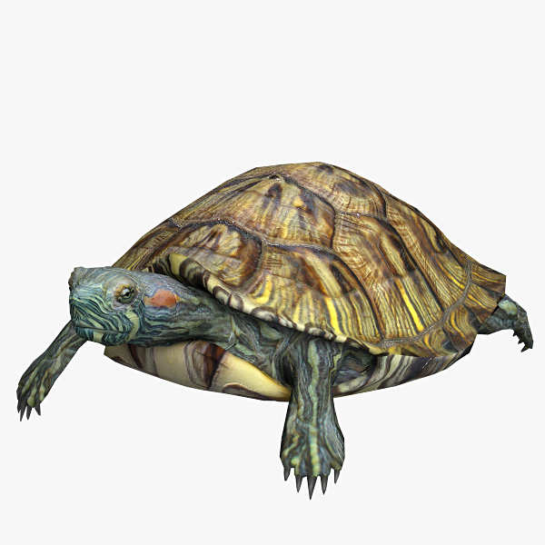 3d resolution turtle water
