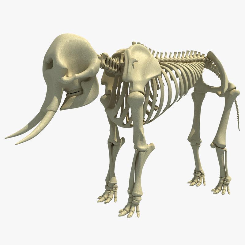 african elephant skeleton 3d 3ds