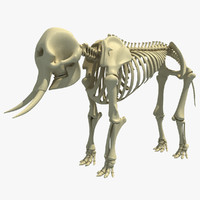 african elephant skeleton 3d 3ds