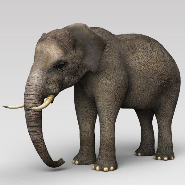 3ds elephant cheetah3d