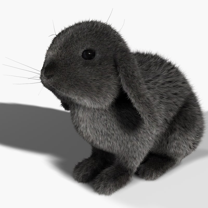 3d model rabbit gray fur