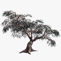 Olive Tree Barska