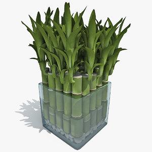 3d model lucky bamboo