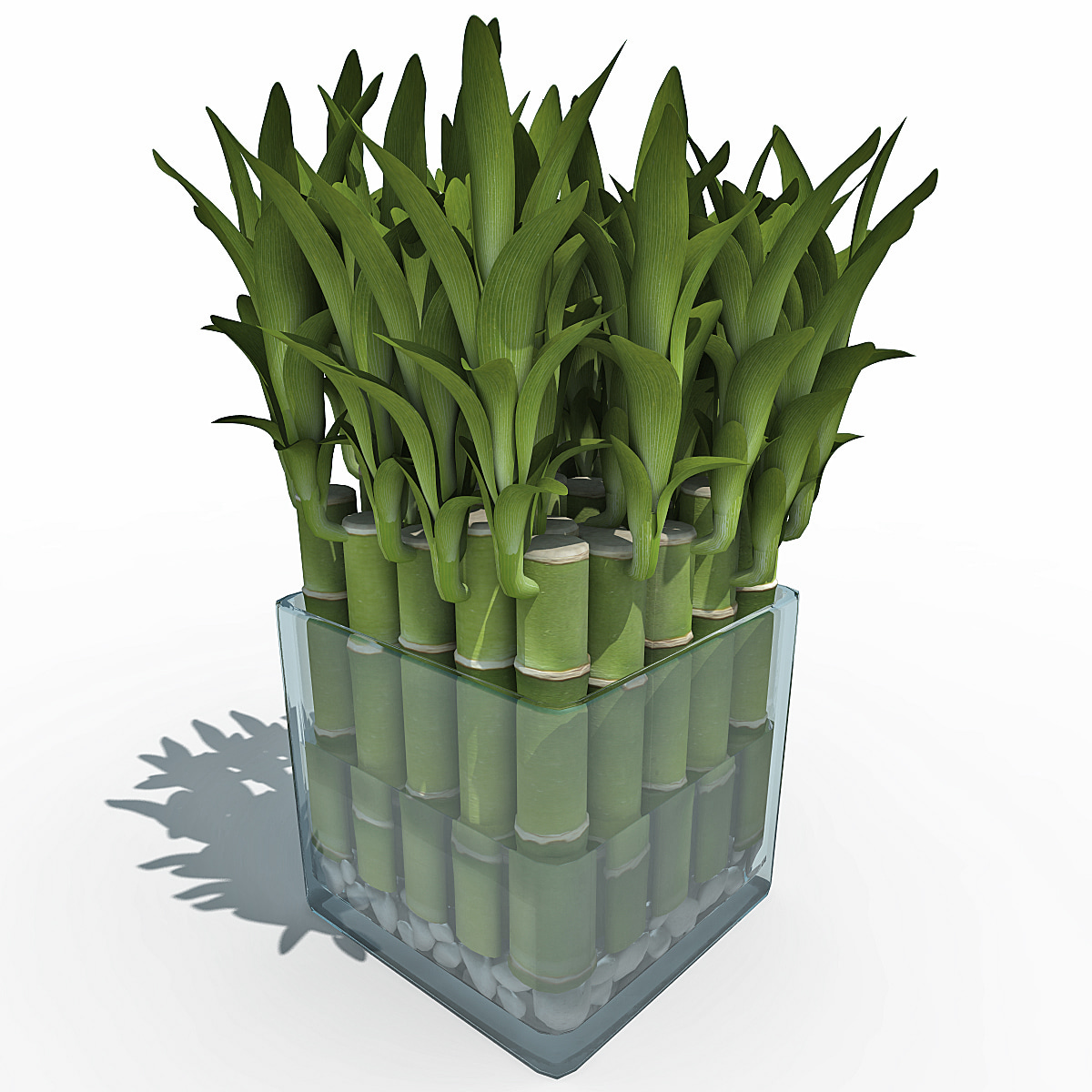 3d model lucky bamboo. Black Bedroom Furniture Sets. Home Design Ideas