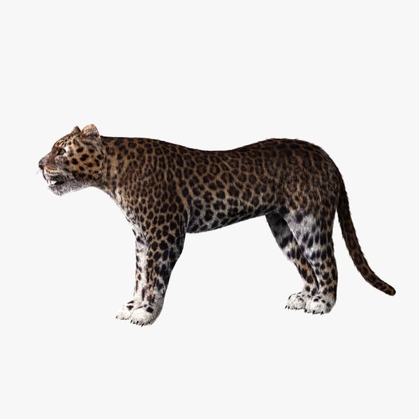 3d model leopard animation