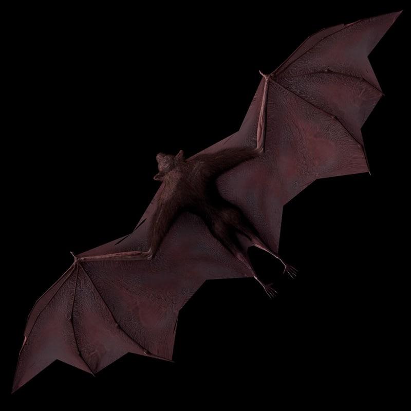 flying fox 3d model