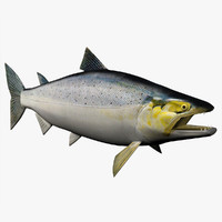 3d chinook salmon