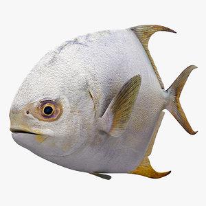 3d model permit fish