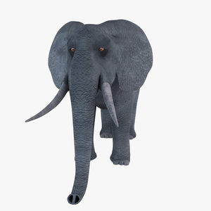 max african elephant