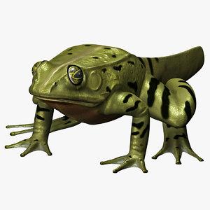 max frog metamorph
