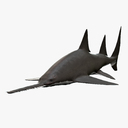 sawfish 3D models
