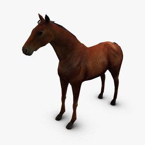 horse arab max