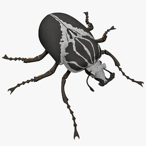 3ds goliath beetle