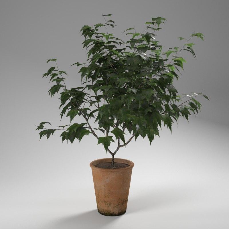 max photorealistic ornamental tree