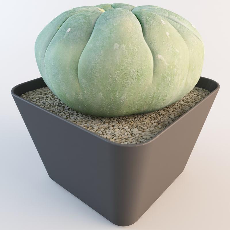 matucana madisoniorum 2 3d model