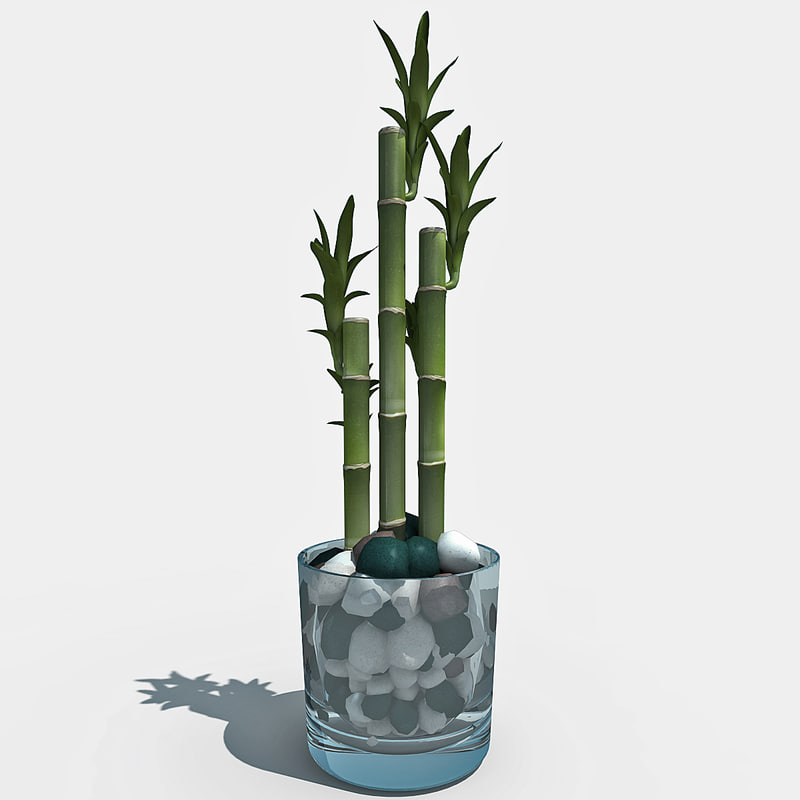 3d lucky bamboo plant 3