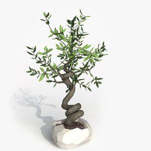 3d realistic bonzai olive tree model