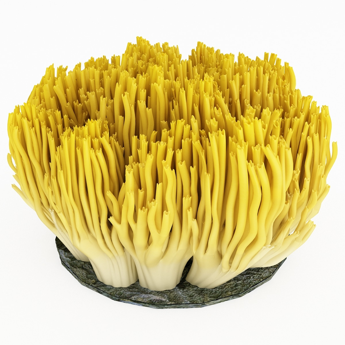 coral fungus 3d model