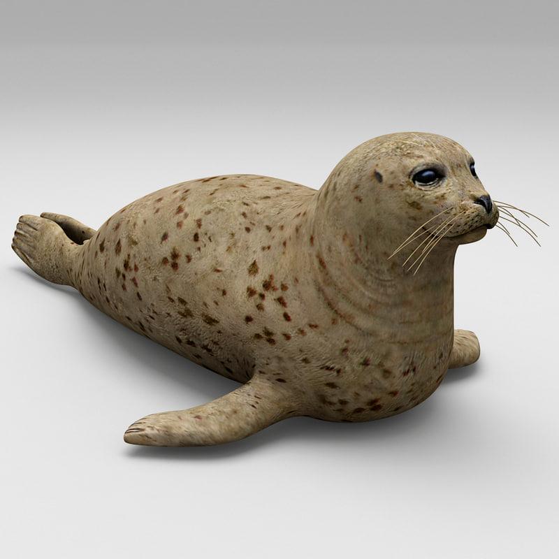 3d harbor seal