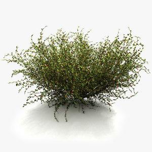 plant shrub max