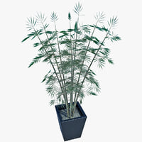 3d model potted bamboo plant