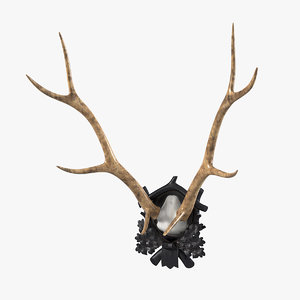 3d model early deer antler mount
