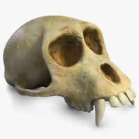 3d monkey skull subdivision 2