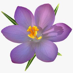 realistic crocus flower 3d 3ds