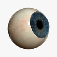 3d eyeball sclera iris