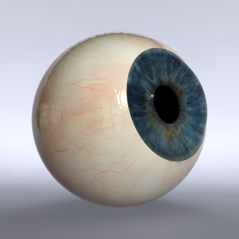 3d eyeball sclera iris