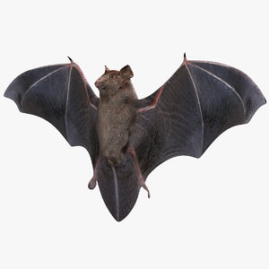 3d bat animal modelled model