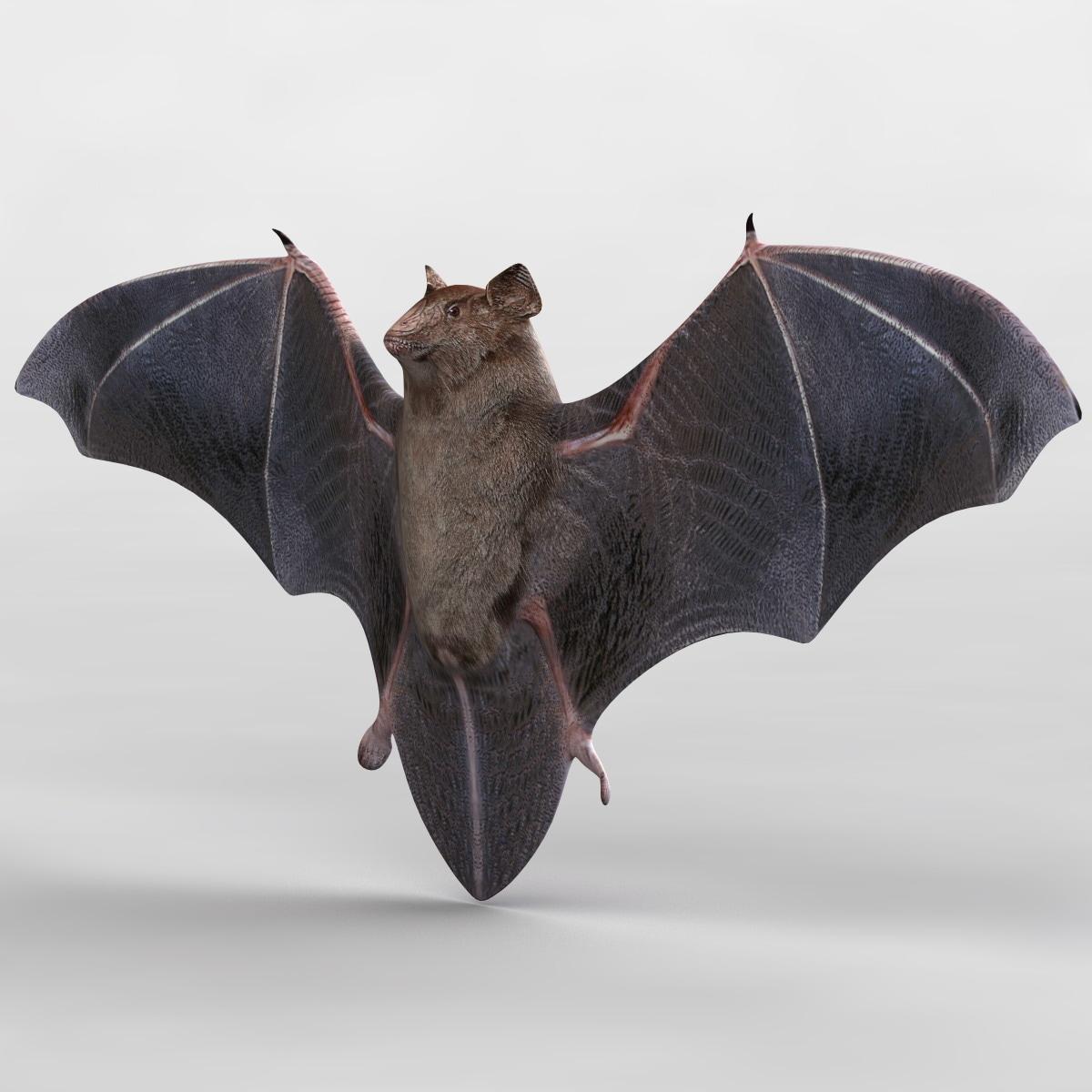 3d bat animal modelled model