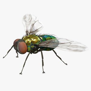 housefly fly max