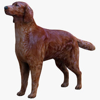 irish setter dog max