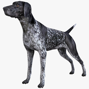 max german shorthaired pointer