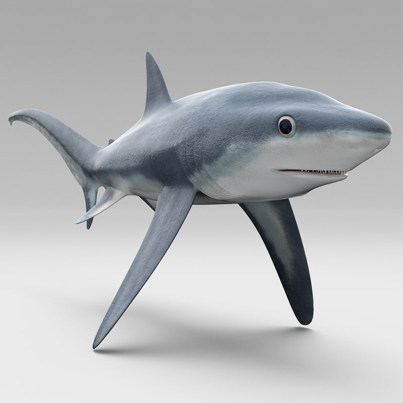 3ds max fox shark