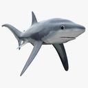 fox shark 3D models