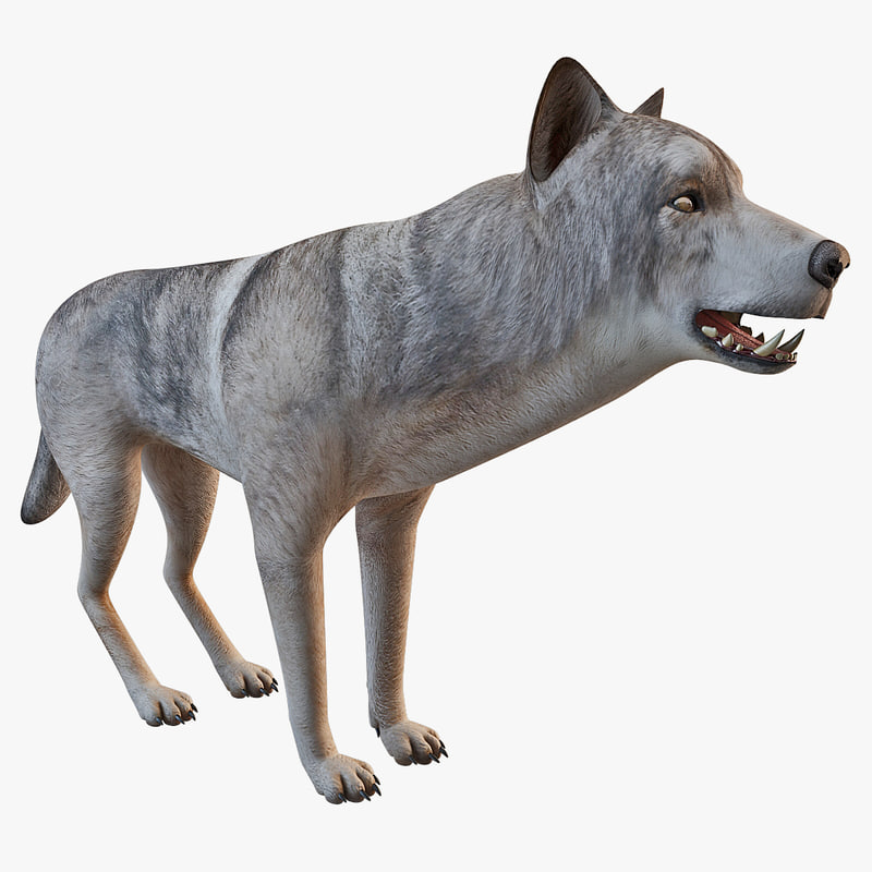 wolf rigged animal 3d max