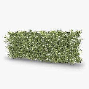 siberian dogwood hedge 3d model