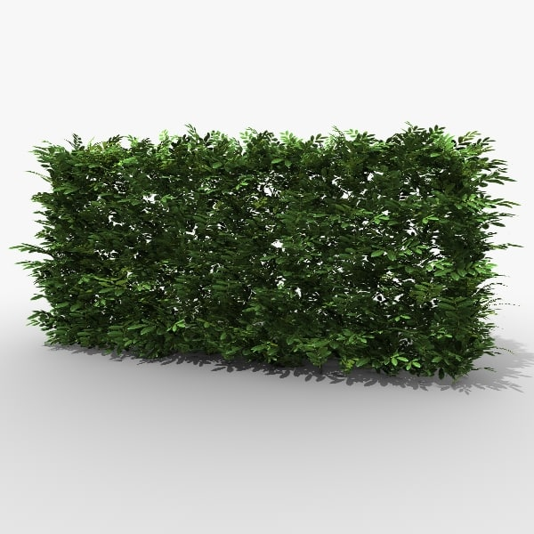 3ds max common laurel hedge