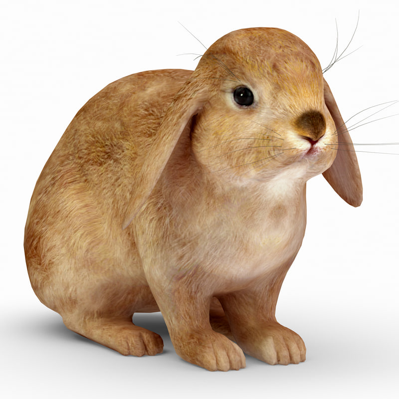 rabbit red 3d model