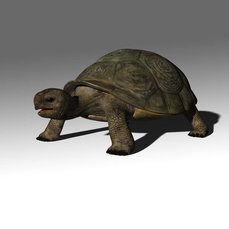 3dsmax hermanni turtle 1