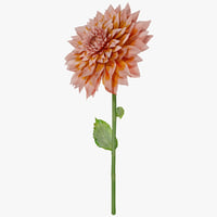 dahlias flower 3d model