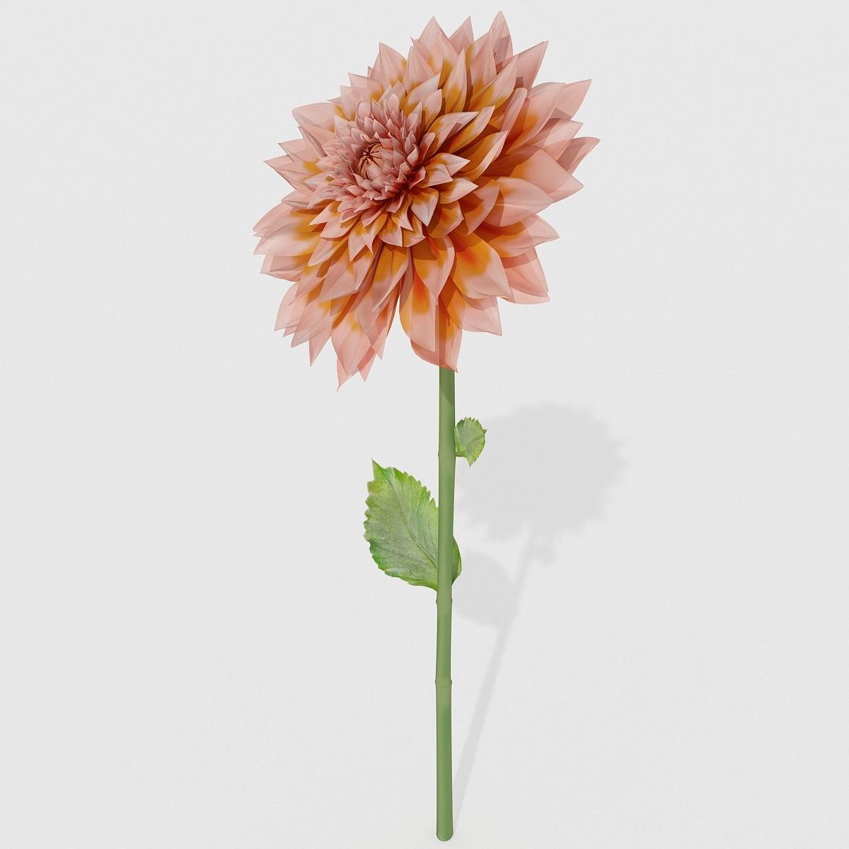 dahlias flower 3d model