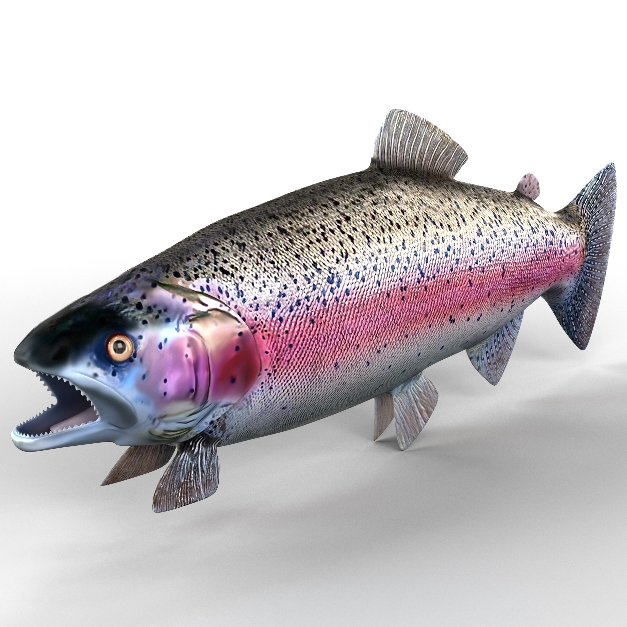 rainbow trout 3ds